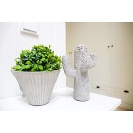 Kaktus UNICO S