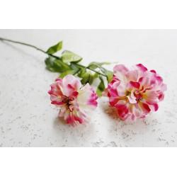 Cynia kwiat podwójny różowa 70 cm