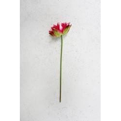 Lotos na łodydze 45 cm