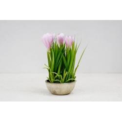 Krokus różowy 25 cm