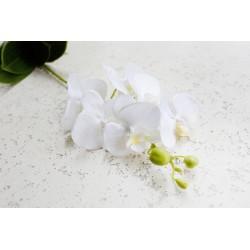 Kwiat Storczyk z korzeniami biały 58 cm