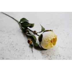 Peonia natural 65 cm