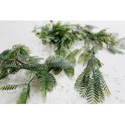 Mimosa 124 cm