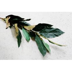 Gałąź liści Magnolii 75 cm