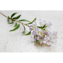 Oleander 80 cm
