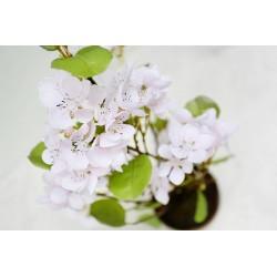 Kwiat Wiśni 60 cm