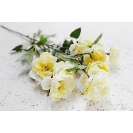 Róża dzika gałązka żółta 75 cm