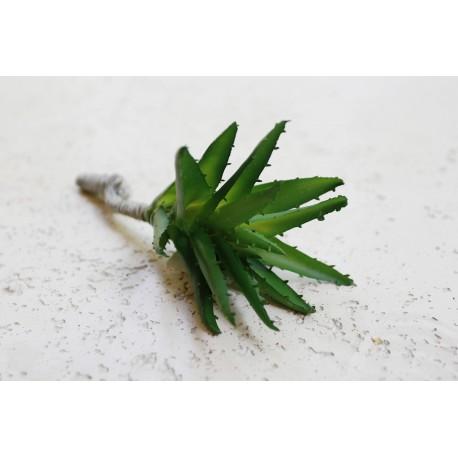 Sukulent Succulent aloe 608