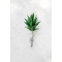 Sukulent Pineapple head 500